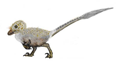 Baby velociraptor by MrWeaselMan