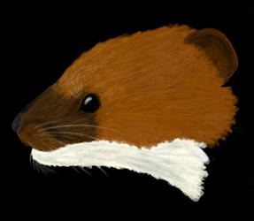 Just a weasel by MrWeaselMan
