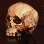 Digital painting skull study by JeffStahl