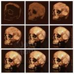 Digital painting skull study process by JeffStahl