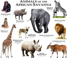 Animals of the African Savanna by rogerdhall