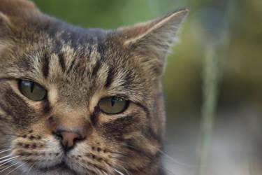 Cat by Haldered