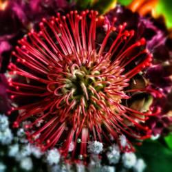 A fire sparkling by FlowerOfTheForest