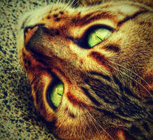 ... eyes ... by FlowerOfTheForest