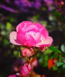 ... paths crossed ... by FlowerOfTheForest
