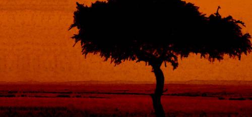 African Sunset Wallpaper by LightningGuardian