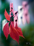 red autumn by TheAutumnLeaves