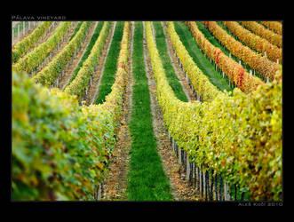Palava vineyard by Westik