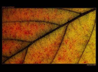 Leaf of autumn by Westik