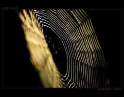First Light by Westik