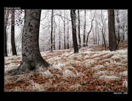 Fabulous woods by Westik