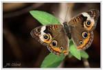 Butterfly II by eskimoblueboy