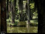Urban Swamp by eskimoblueboy