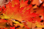 Autumn of life by eskimoblueboy