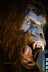Old gorilla by eskimoblueboy