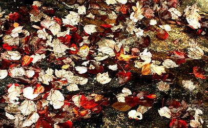 Autumn by eskimoblueboy