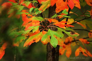 Autumn in DeSoto State Park by eskimoblueboy
