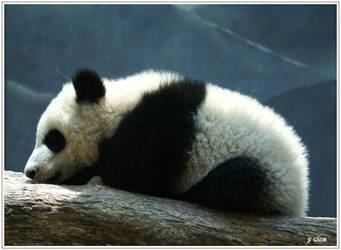 Sleeping Baby Panda II by eskimoblueboy