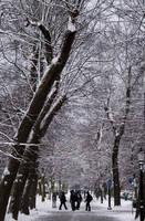 Winter Scene by flatproduct