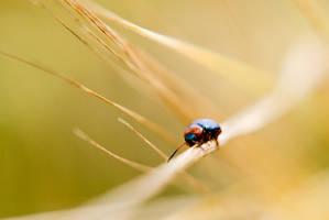 Leaf Beetle by flatproduct