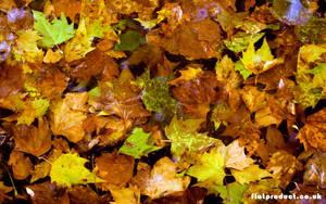 Autumn Leafs by flatproduct