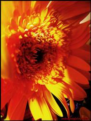 Sun by AndraShorty
