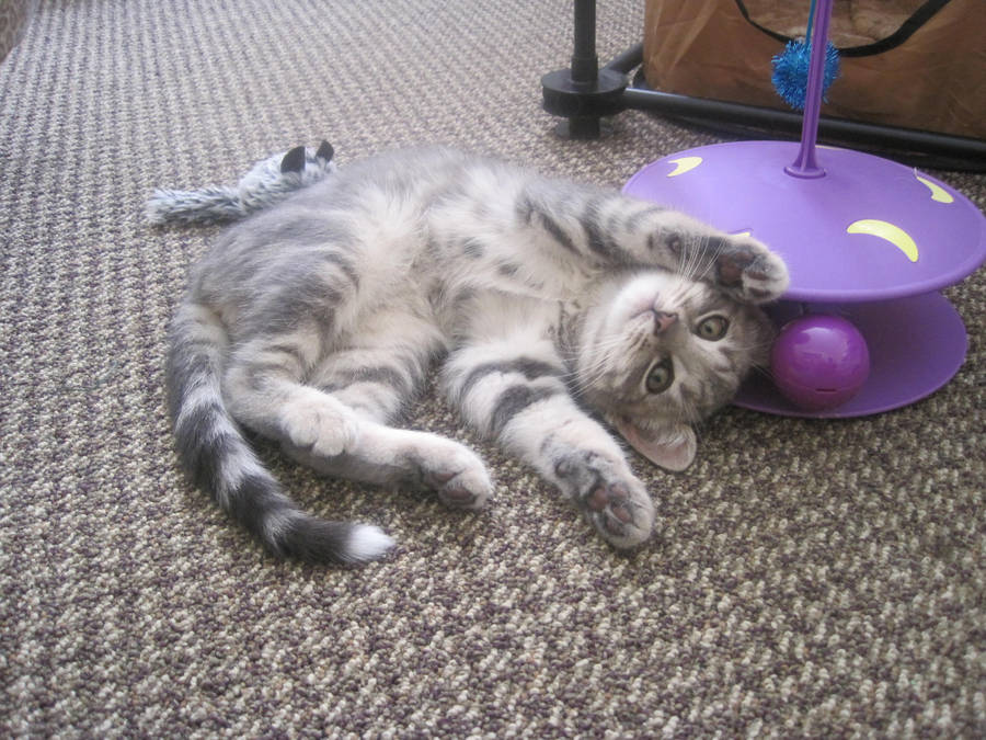 Tamarind Cat by Lurfstar