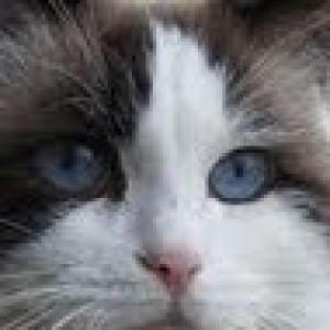 Olivia74's Profile Picture