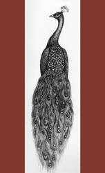 Peacock by pinkminx09