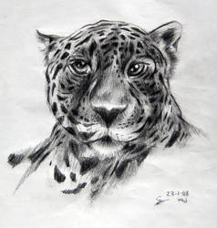 Leopard on pencils by appledaniels