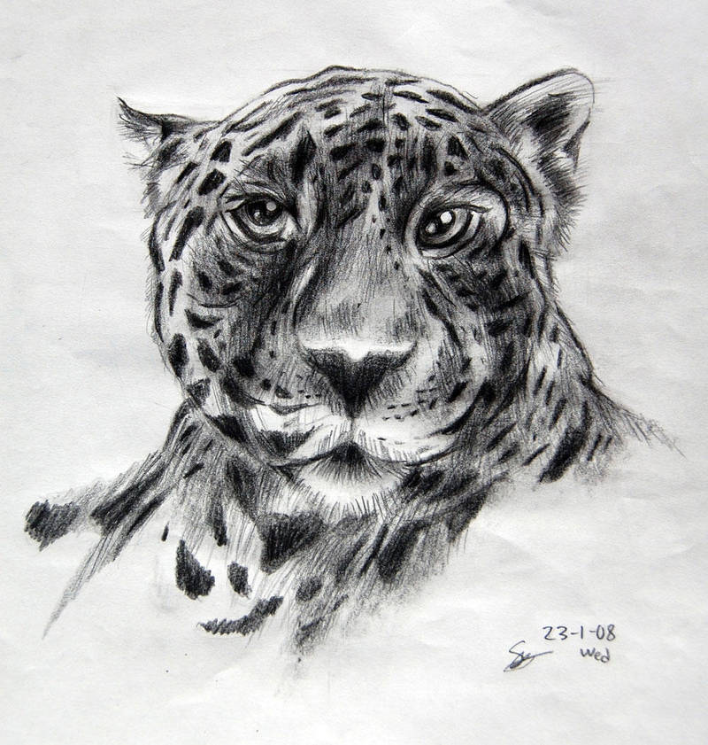 Leopard on pencils by appledaniels