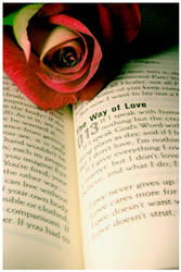The Way of Love by christians