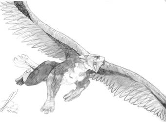 Griffin by piremu