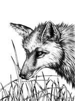 Grassland Explorer by ScribbleFox