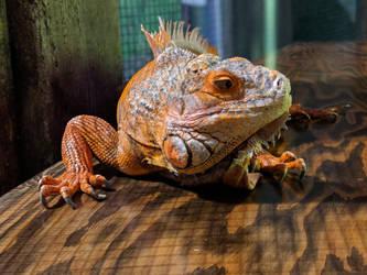 lizard 3 by yellowicous-stock