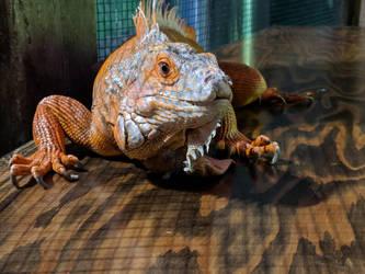 lizard 4 by yellowicous-stock