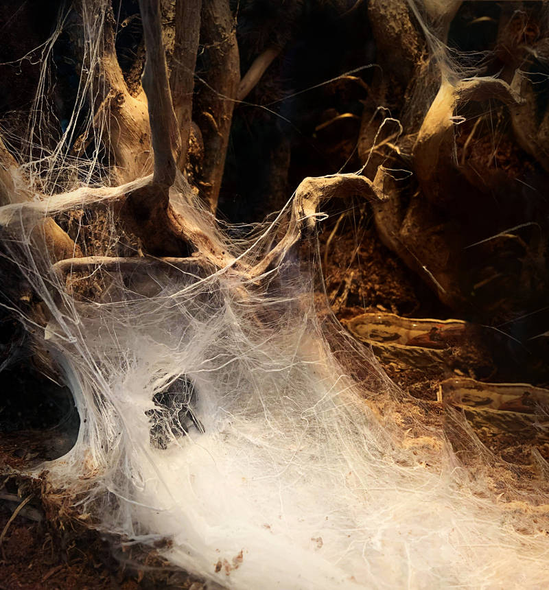 web cave 2 by yellowicous-stock
