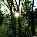 Sungarden by Siochanna