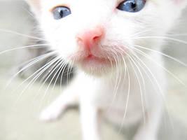 Meow by Jojonel