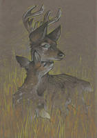 Fawn and Deer by Taski-Guru