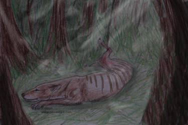 Snared by Jossun