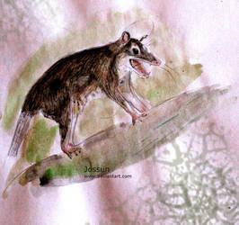 Opossum by Jossun