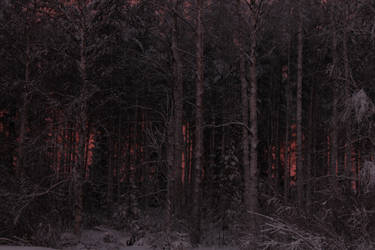 Red Forest by Jossun