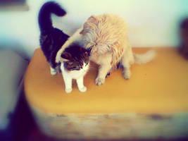 Don't worry my Friend~ by MIHETIGRVO