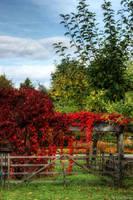autumn comes by Drezdany