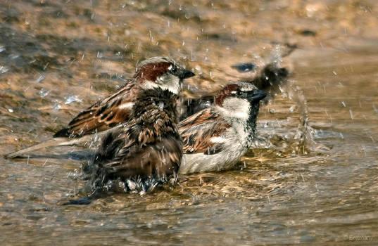 to have a bath by Drezdany