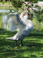 let's dance by Drezdany
