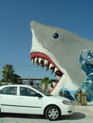 SHARK ATTACK by PheonixFlyer