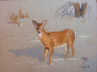 Doe in the Snow by robertsloan2