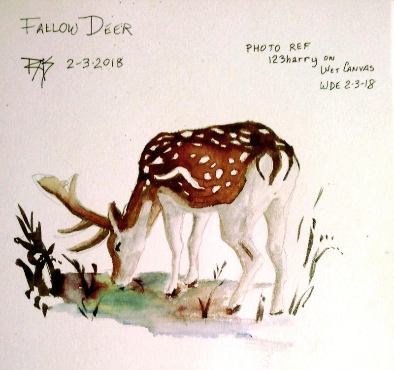 Fallow Deer by robertsloan2